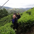 We recently spent a few days exploring the Cameron Highlands in Malaysia. First we traveled from Melaka ,which we liked very much, to Ipoh. We spent two nights there. It was pleasant enough but fairly unremarkable. It was marred by me (Andrew) being extremely ill. Fever, headache, achy body, diarrhea,...