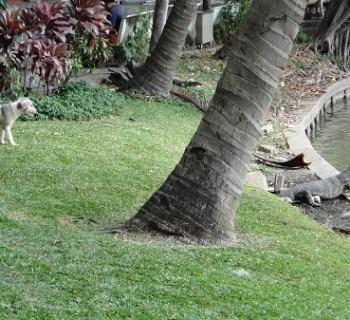 Dog and Lizard at Lumphini Park, Bangkok, Thailand